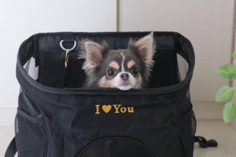 愛があふれる…愛犬(と料理)ブログ