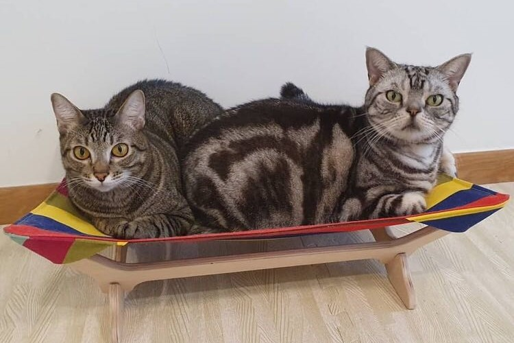 猫たちの気ままな日常をお届け! in シンガポール