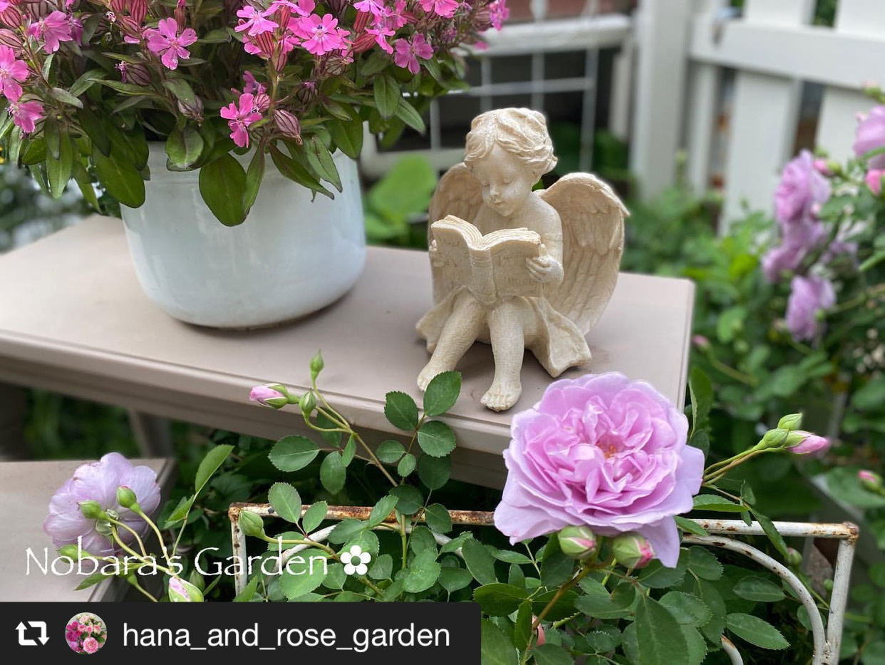 紫よりの深く綺麗な色のバラ「レイニーブルー」 画像1