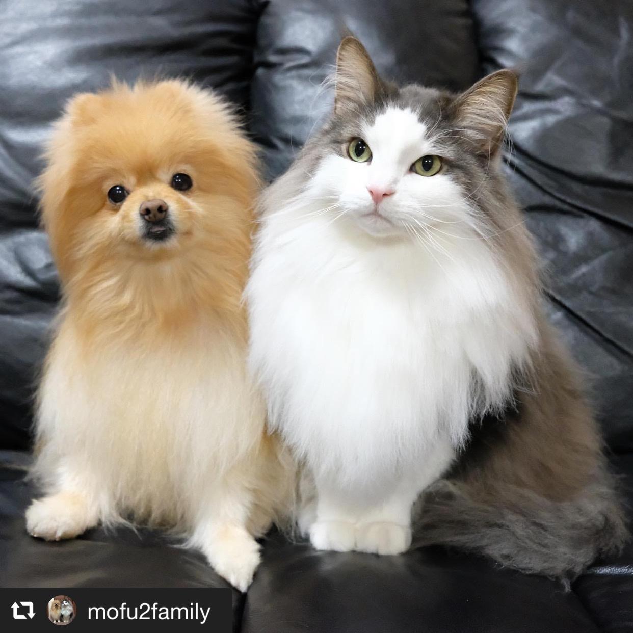 犬の姉と猫の弟、仲良しの秘訣は? 画像1