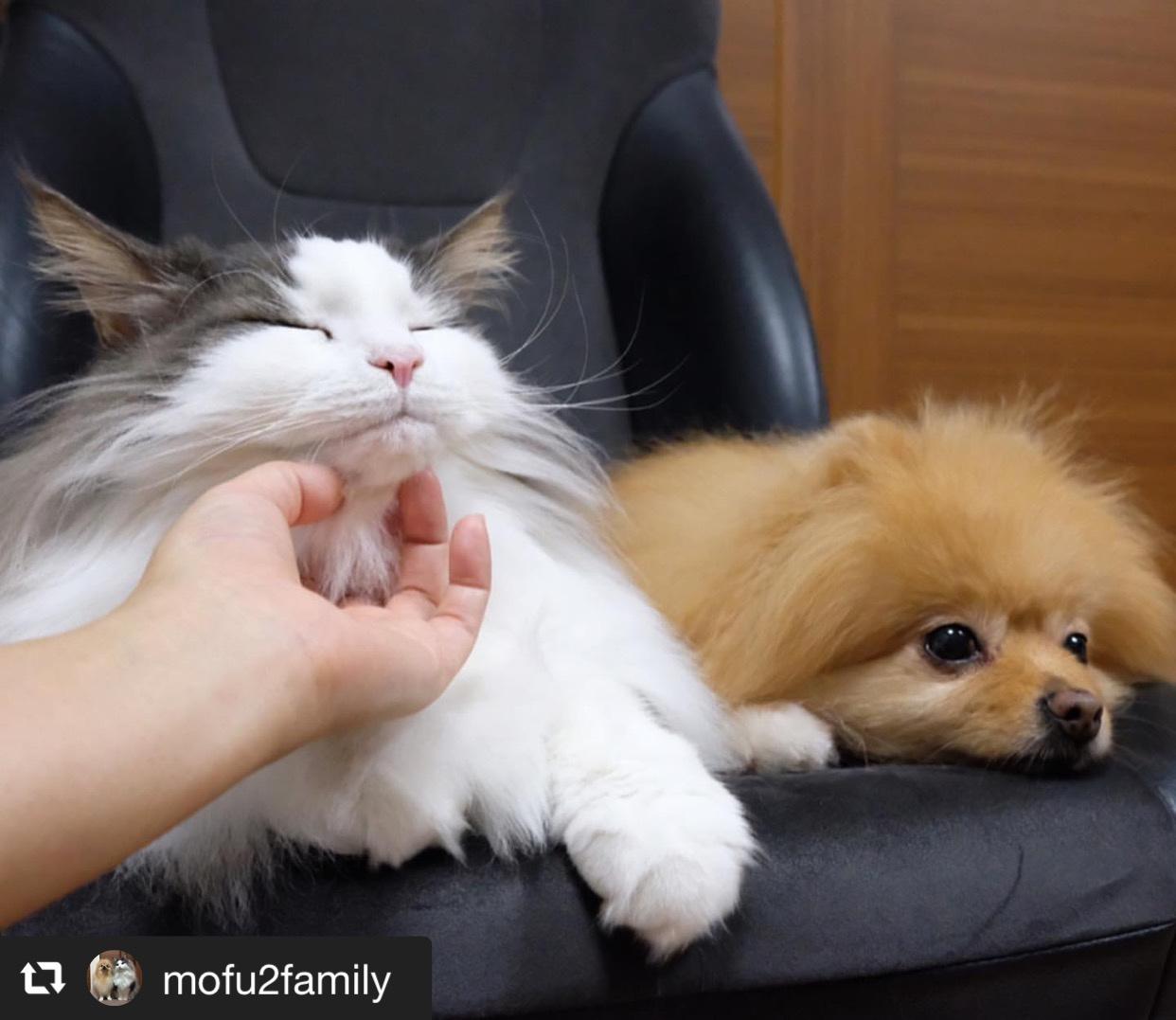犬猫それぞれの撫で方のコツ 画像1