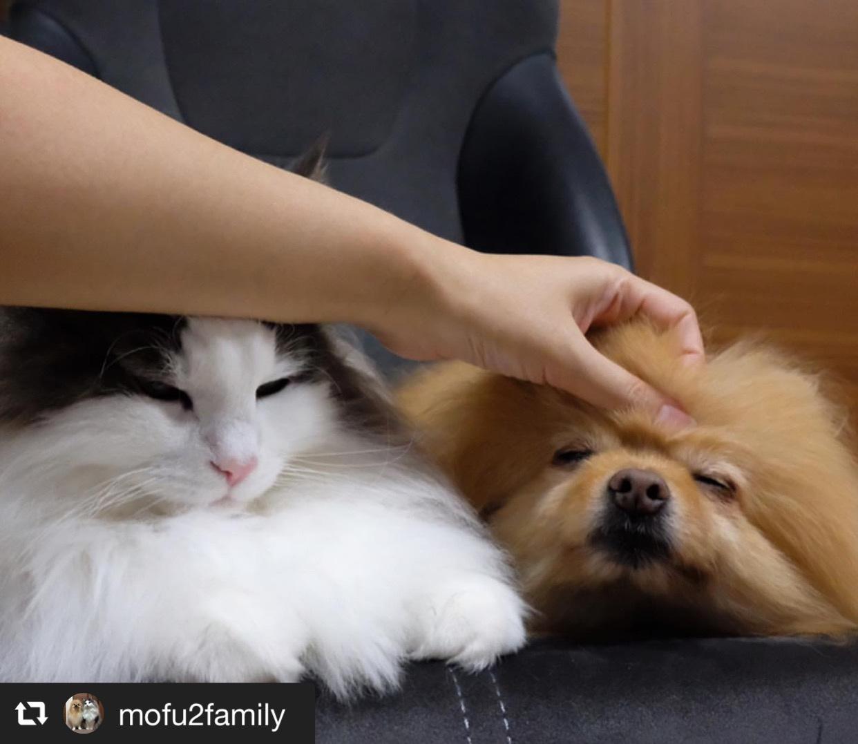 犬猫それぞれの撫で方のコツ 画像2