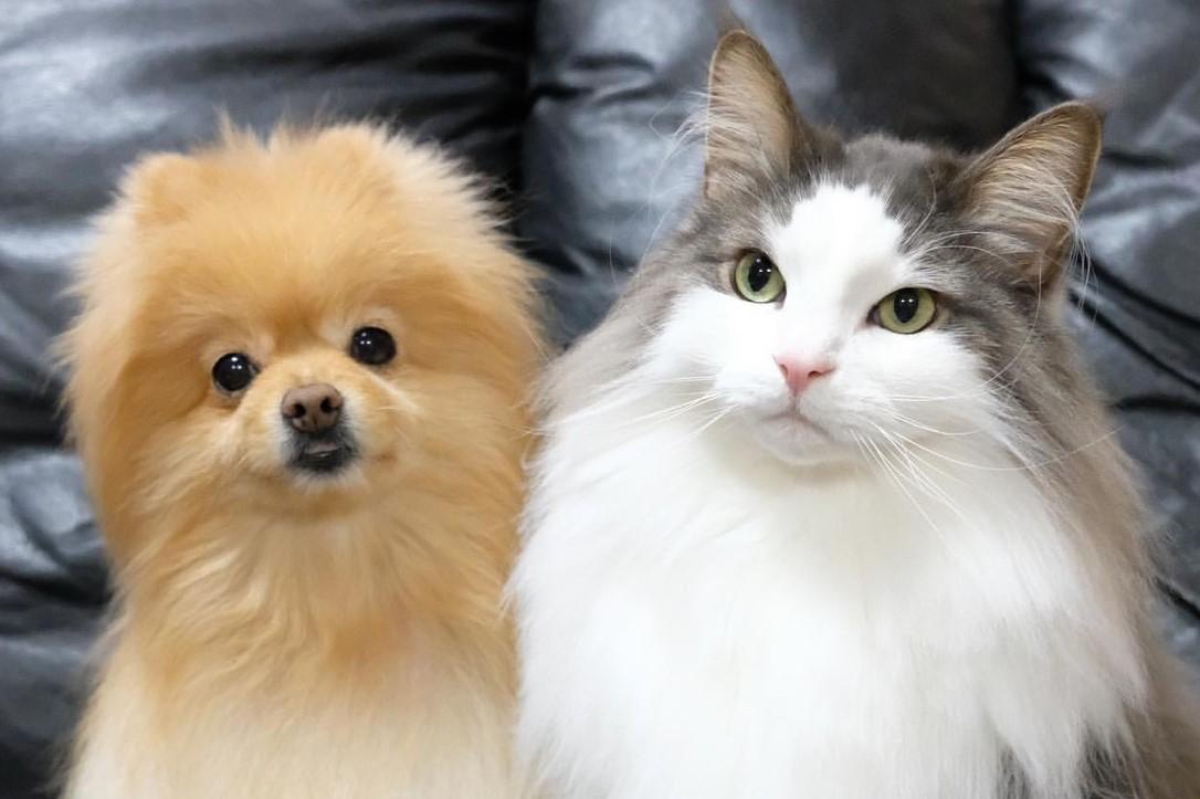 もふもふ好き必見! 仲良しな犬猫の写真絵日記