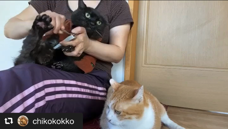 おとなしく爪を切られる猫たち 画像1