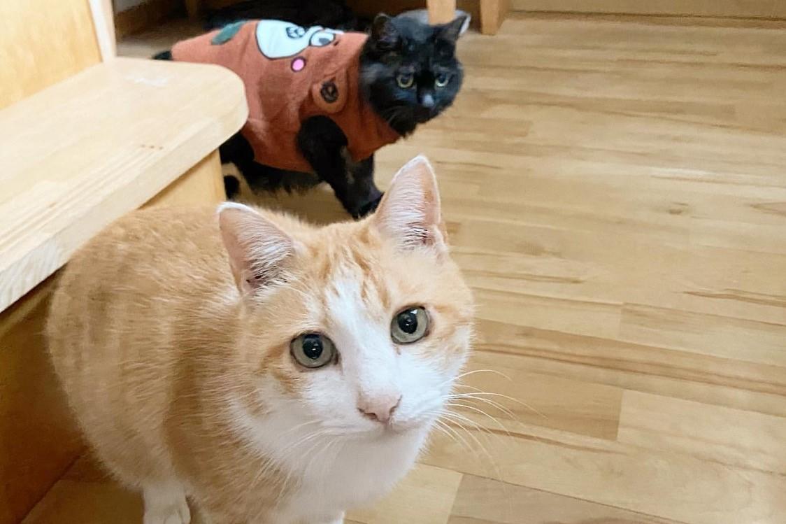 大阪から北海道に移住した夫婦が営む、動物たちとの豊かな暮らし