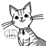 miyu_shimamura