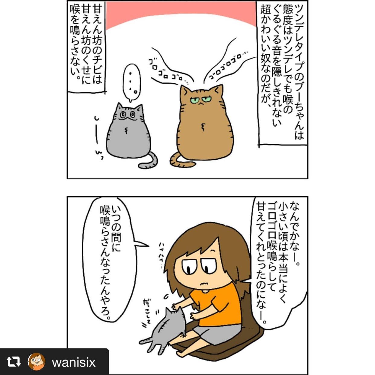 飼い猫チビちゃんのゴロゴロ音 画像1